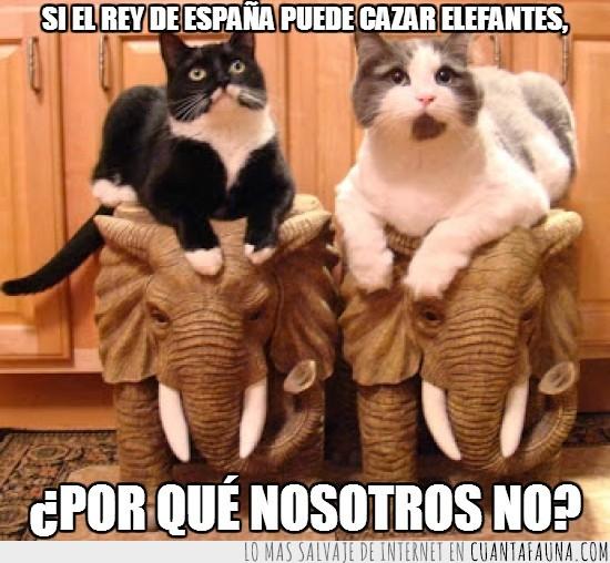 cazar,elefantes,encima,figuras,gatos,rey de España