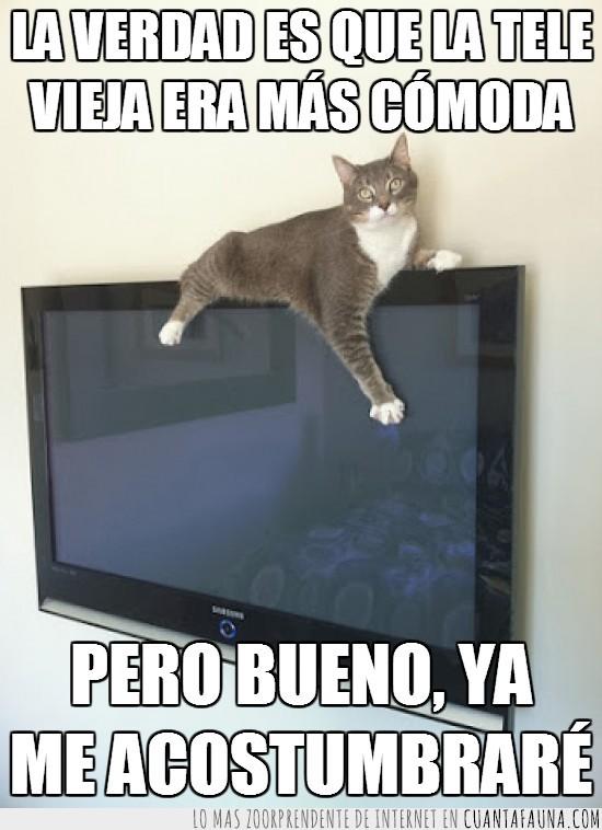 encima,gato,pantalla,plana,subida,tele,Televisión