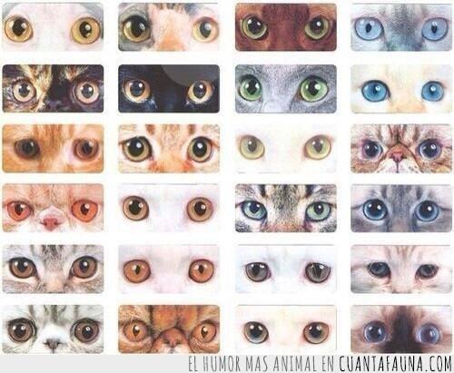 azules,cafés,colores,gatitos,miel,mirada,ojazos,ojos,verdes
