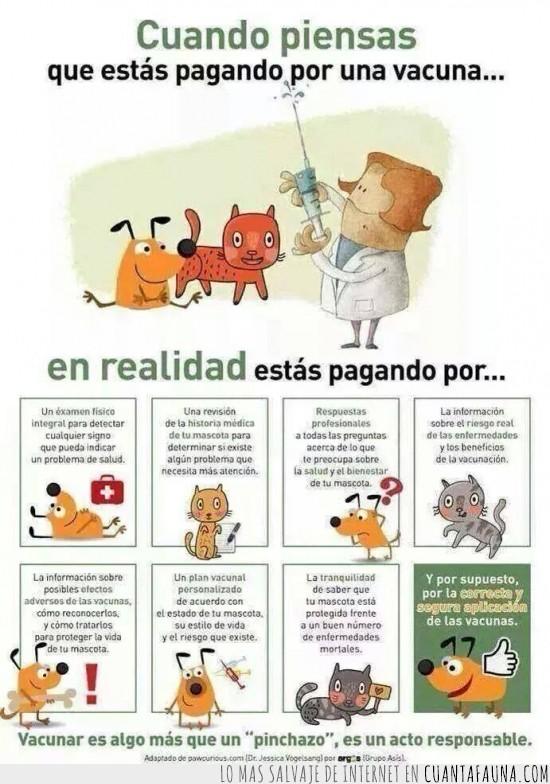 gatos,perros,vacunas