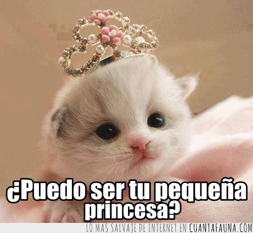 corona,Gatita,pequeña,princesita