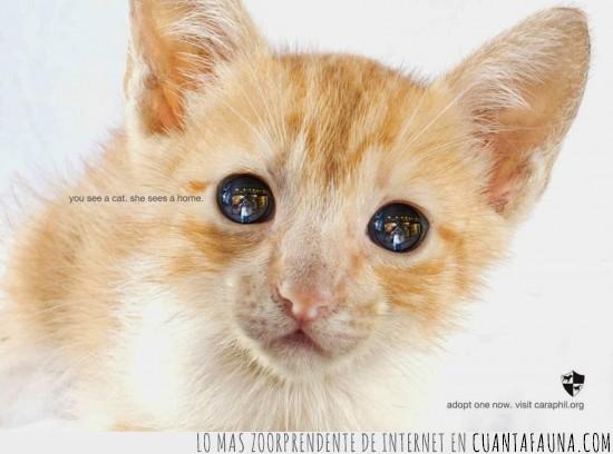 abandonado,adopción,adoptar,cariño,gatito,hogar,ilusión
