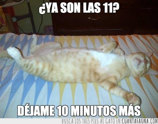boca arriba,despertar,dormir,gato,iguales,madrugar,panza,pereza