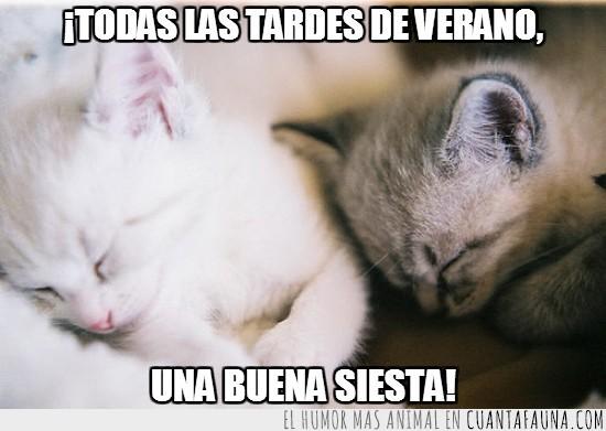 blanco,costumbre,dormir,gatitos,Gatos,gris,monadas,siesta,tardes,tradición,verano