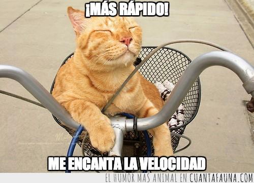 bicicleta,brisa,cerrados,disfrutar,fresquito,Gato,gustar,movimiento,ojos,paseo,velocidad,viento
