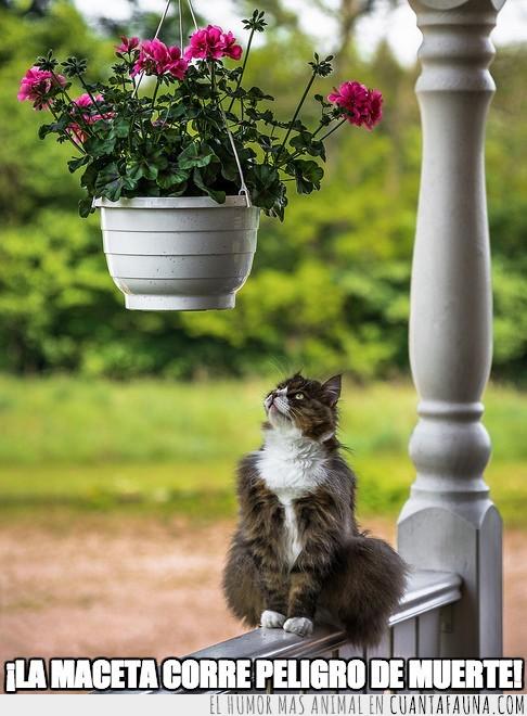 caída,flor,Gato,maceta,mirada,morada,peligro,porche,rotura,valla