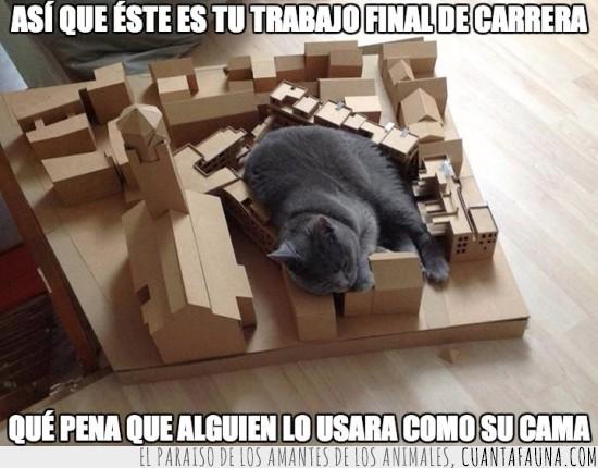 cartón,gato,maqueta
