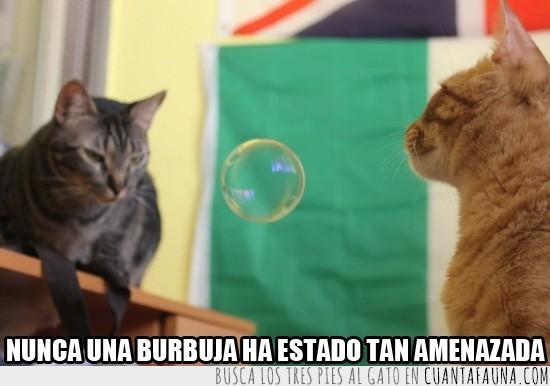 burbuja,gatos,graciosos,lucha,monos,negro,pompa,rubio