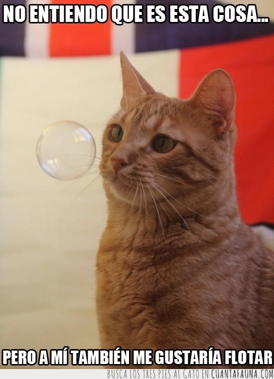 bonito,cara,gato,gracioso,pompa,rubio