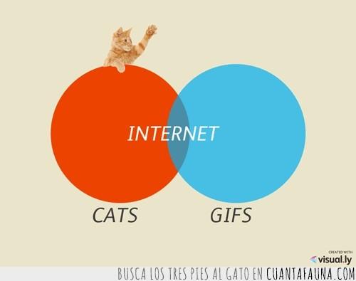 gatos,gifs,reyes del internet
