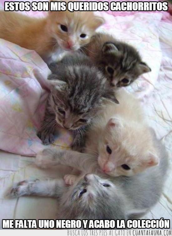 blanco,cachorros,colección,completar,faltar,gris,negro,rubio