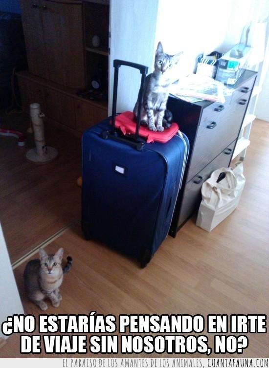 maletas,mirar,saben que me voy,viaje