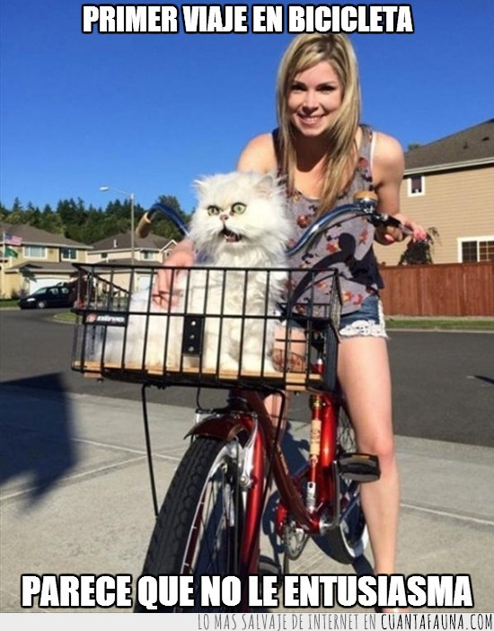bicicleta,blanco,cesta,chica,gato,susto,vaya cara