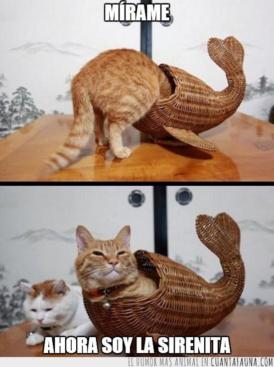 cesta,dentro,gato,metido,mimbre,sirena