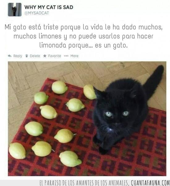 gato,limonada,limones,maldad,triste