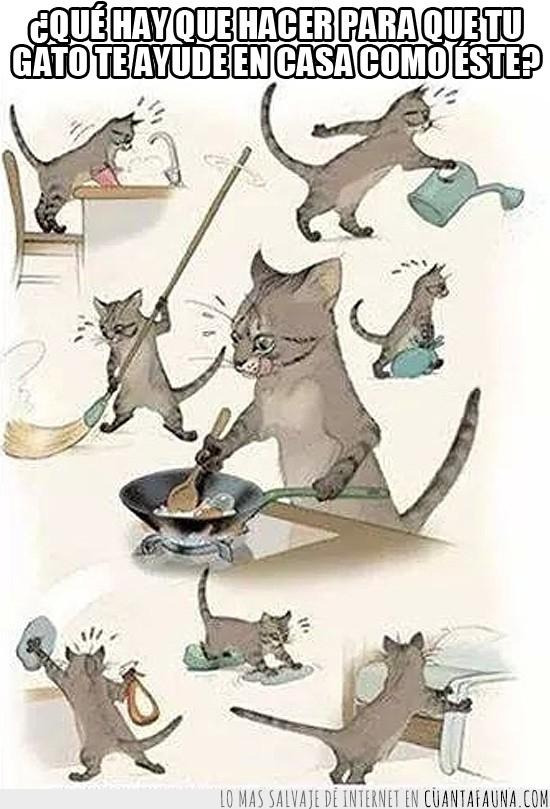 ayudar,cocinar,de la casa,domesticas,gato,limpiar,tareas