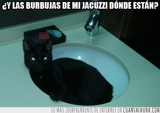 baño,burbujas,gato,jacuzzi,lavamanos,pica
