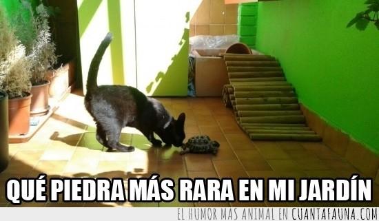 gato,jardin,piedra,tortuga