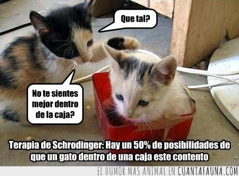 caja,gatito,psicólogo,schrödinger,terapia,triste
