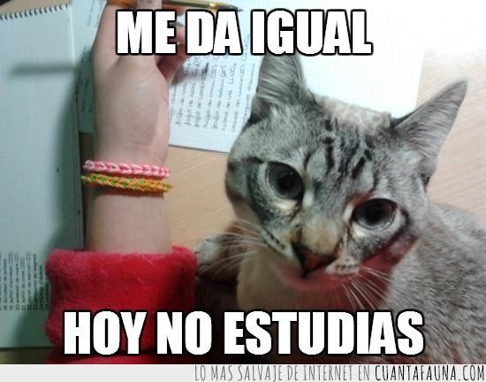 en medio,estudiar,gato,molestar,no dejar