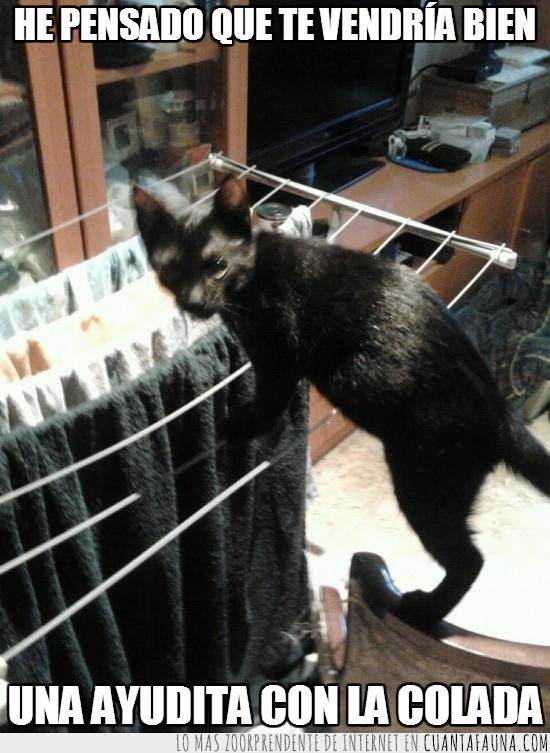 ayudante,ayudar,colada,gato,ropa,tendedero,tender