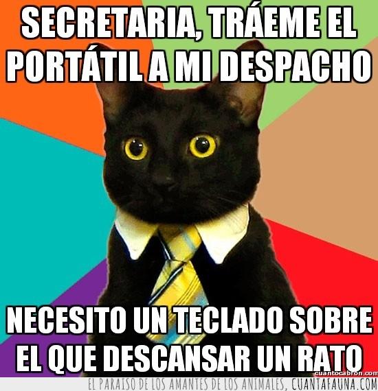 currito,descansar,despacho,empresario,gato,portatil,secretaria,teclado