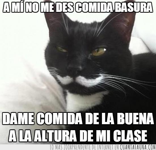 bigote,clase,comida,estilo,Gato,like a sir,señor