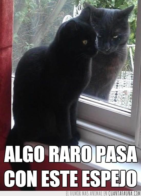 cristal,espejo,gato,gemelo malvado,negro,ventana