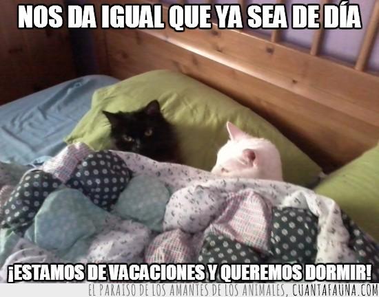 bien,blanco,cama,dormir,gatos,negro,tapados