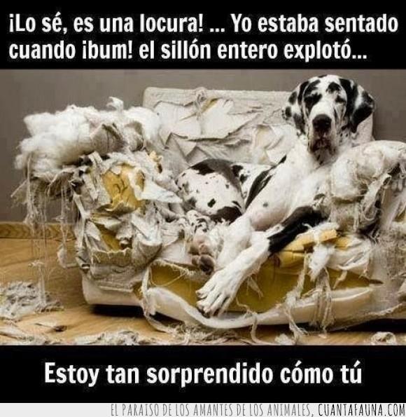 destrozar,disimular,explosion,explotar,perro,romper,sofa