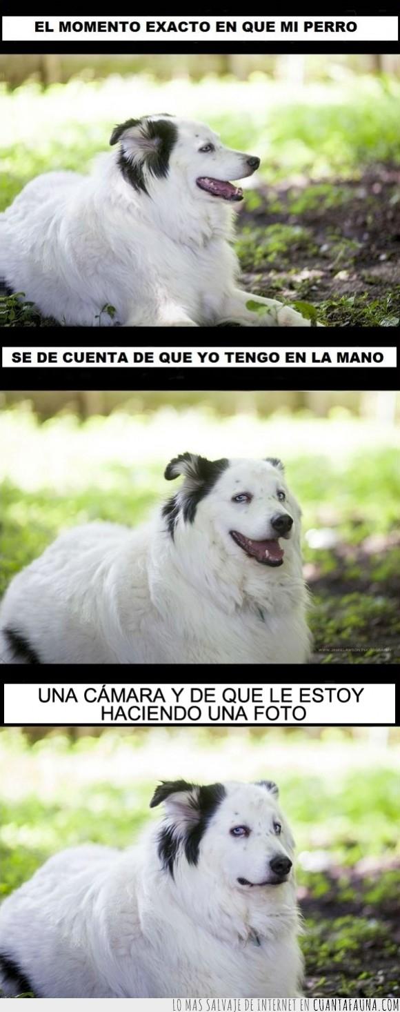 amargado,cámara,can,feliz,foto,perro,seriedad,serio,sonrisa