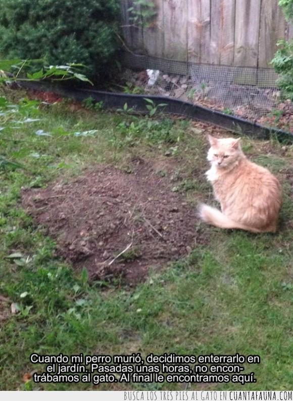 amigo,enterrar,esperar,gato,jardin,mascota,morir,perro,tumba