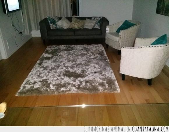 camuflaje,carpet,color,gris,igual,mismo,perro