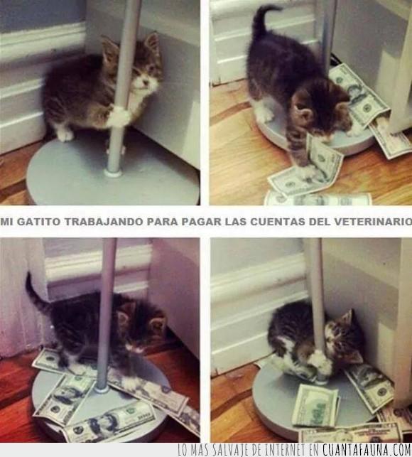 bailarina,barra,dinero,exotica,gato,pagar,poledancing,veterinario