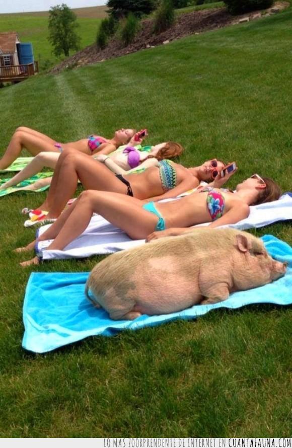 cerdo,chicas,Infiltrados,morena,poner,sol,tomar