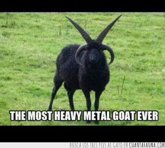 cabra,cuernos,heavy metal,hevy,metal,negro,ritual,satanas,satanico