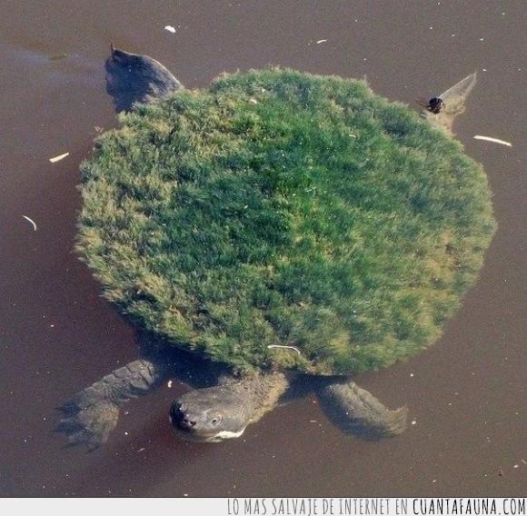 agua,animal,pasto,tierra,tortuga,trozo