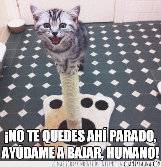 ayudar,gato,humano,poste,rascador,rascar,subido,tierno