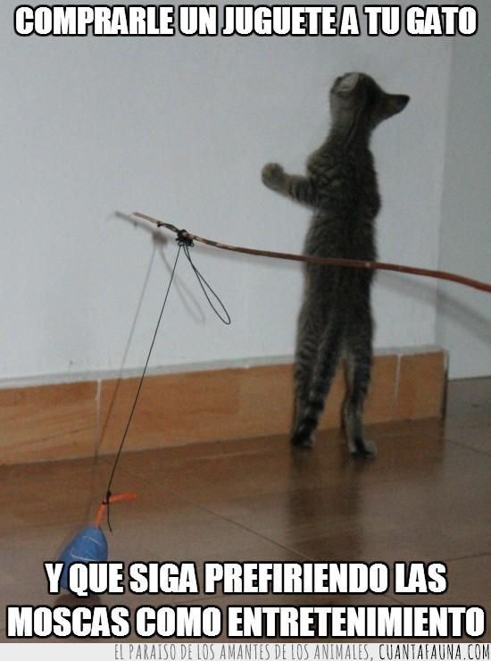 gato,ignorar,jugar con las piedras,juguete nuevo,loco,miau,minino
