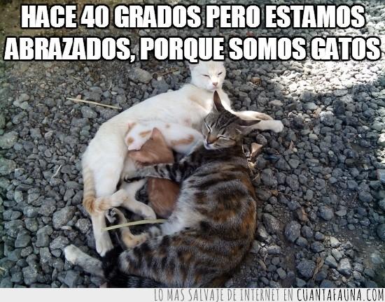abrazados,abrazos,famillia completa,gatetes,gatitos,gatos,peques