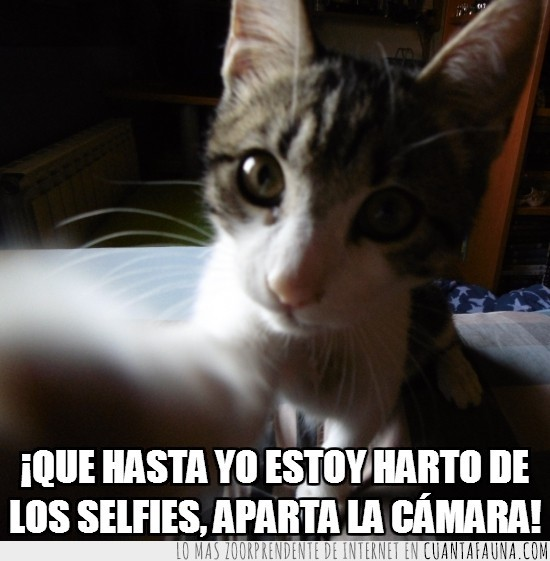 aburrir,cansar,gato,quitar,selfie