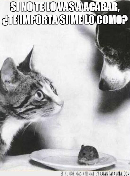 acabar,comer,gato,perro,plato,preguntar,raton