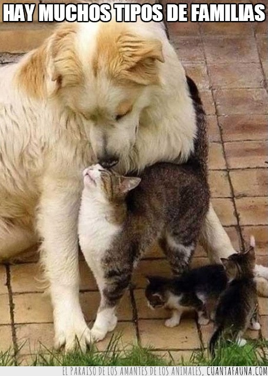 amor para todos,cachorros,gatitos,gato,perro