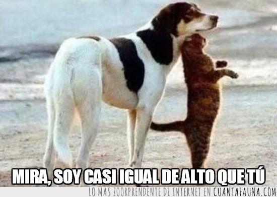 de pie,gato,igual de alto,levantarse,perro,playa