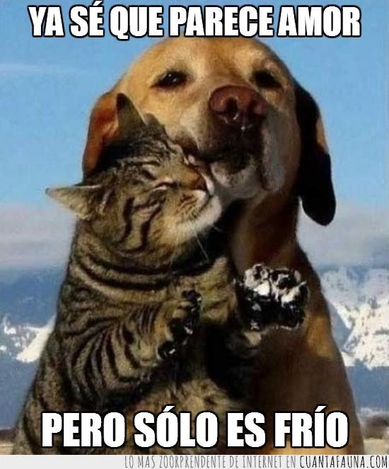amor,evitar,frio,gato,nieve,perro