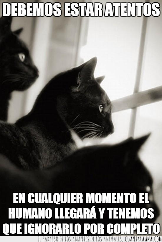 estar atento,gato,humano,ignorar,vigilar
