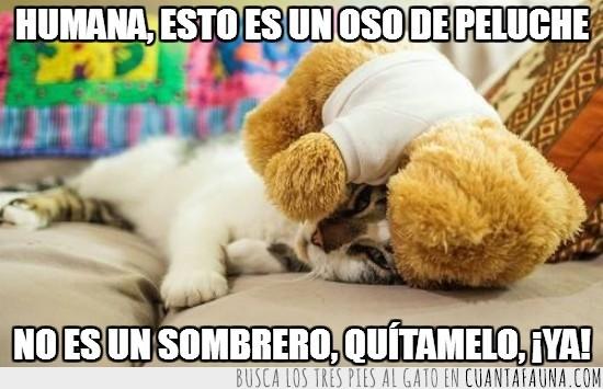 gato,oso,peluche,quitamelo,quitar,sombrero