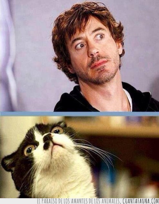 gato,parecidos razonables,Robert Downey Jr