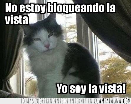 bloquear,gato,tapar,ventana,vista