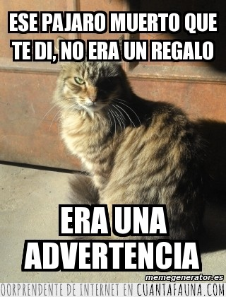 advertencia,amenaza,ave,Gato asesino,muerto,regalo